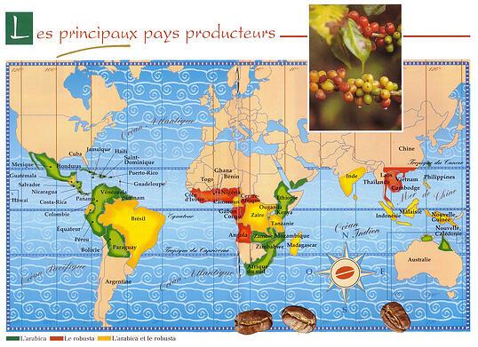 les pays producteurs de café
